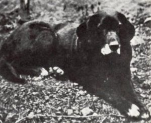 St Johns dog Nell